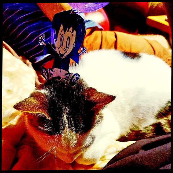 Odette joue avec le chat